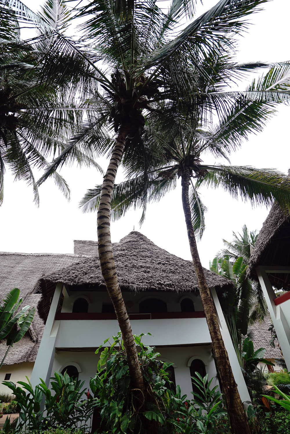Essque Zalu Zanzibar Palm Tree.jpg