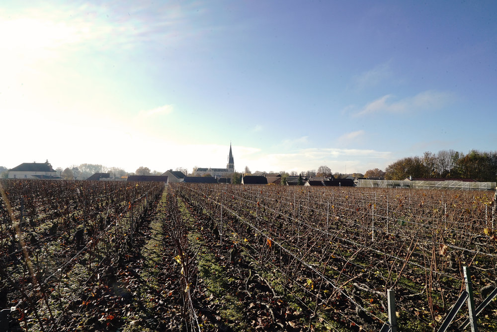 Laurent Perrier Vineyard L.jpg