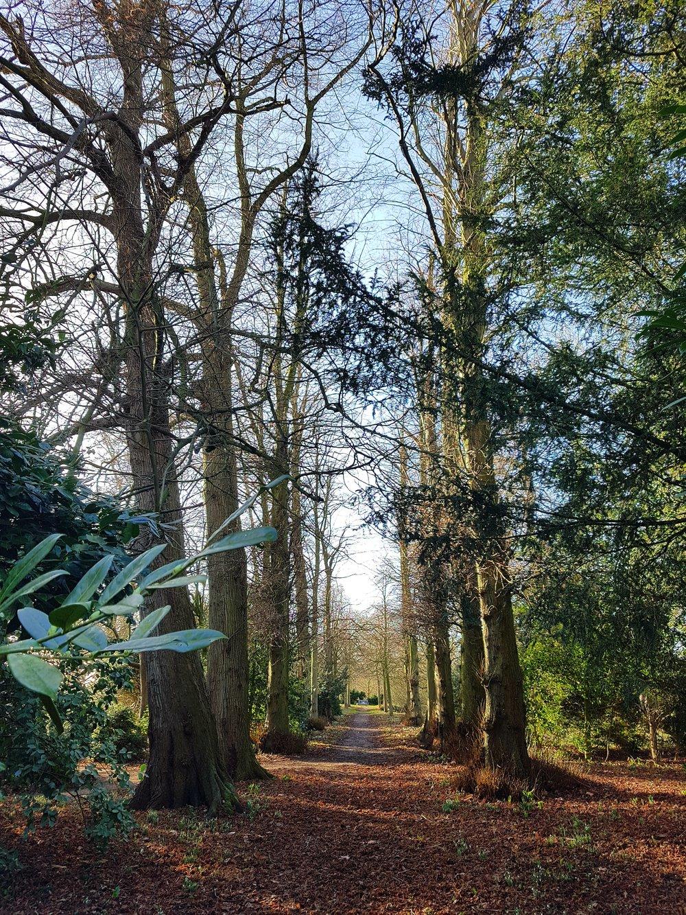 The Wilderness avenue