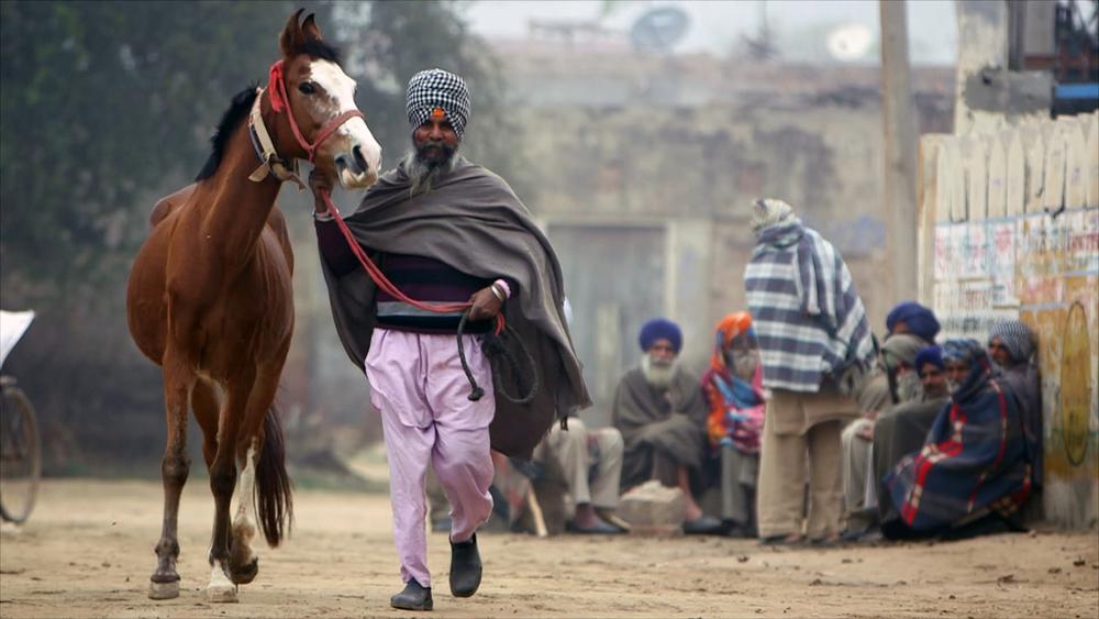 HORSE VILLAGE.jpg