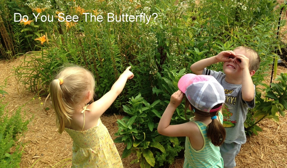 Butterfly 6.jpg