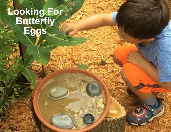 butterfly egg.jpg