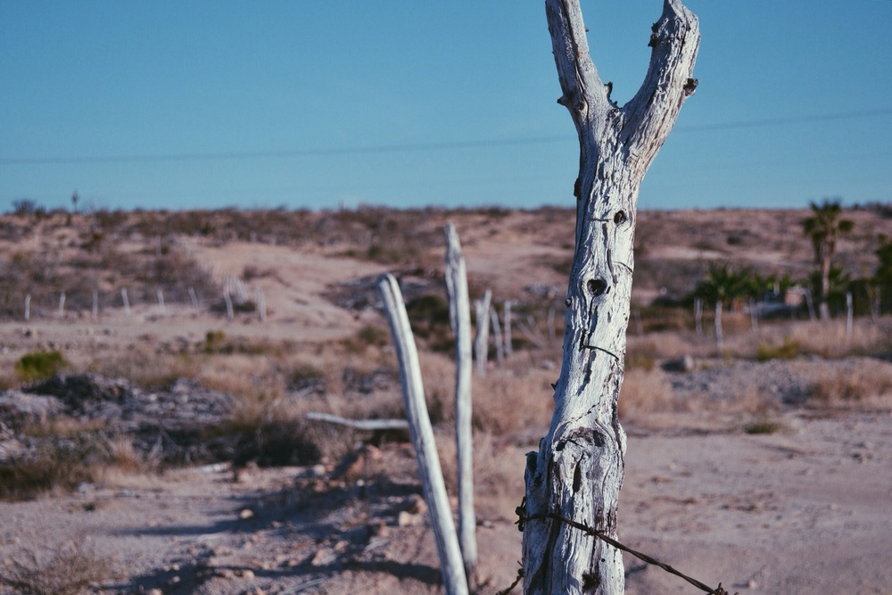 Shot on a Nikon d3100 with the kit lens. Sometimes I like to hang out in deserts. 🌵