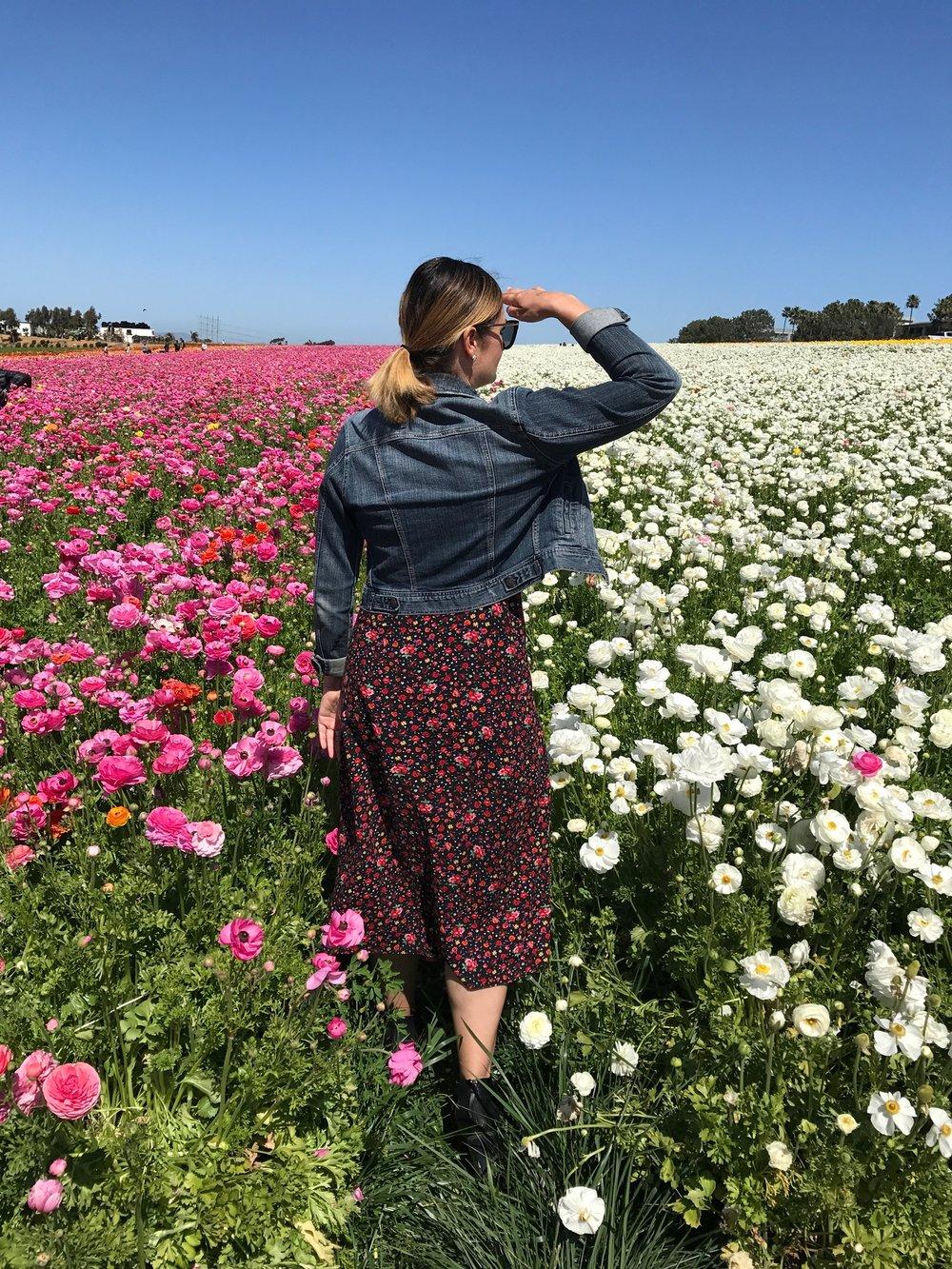 Frolicking in the Carlsbad Flower Fields