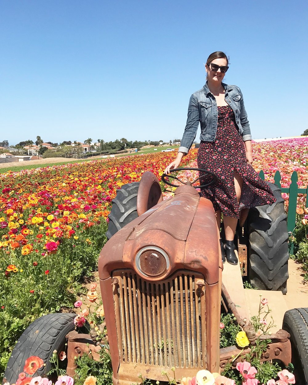 Perfect instgram moment at Carlsbad Flower Fields in California