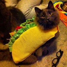 taco cat - Meow!