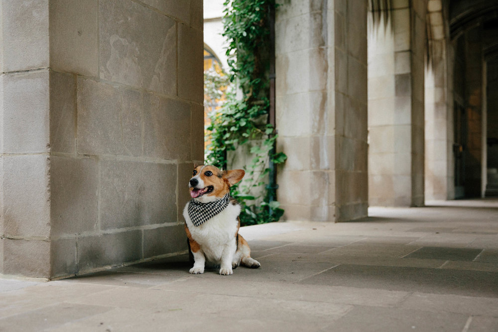 downtown chicago pet photography