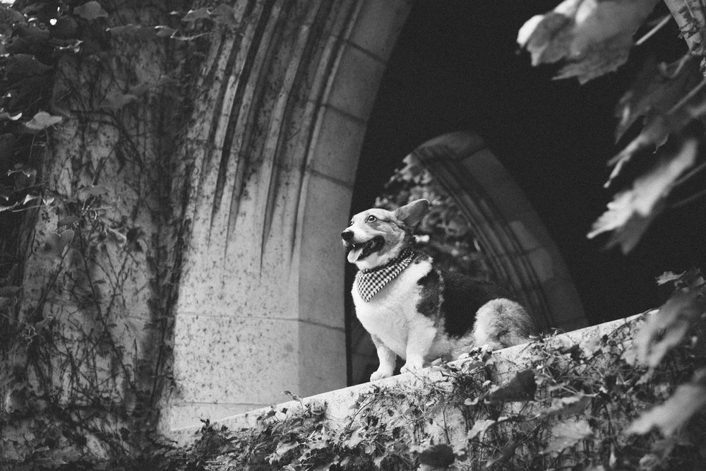 chicago downtown pet photography