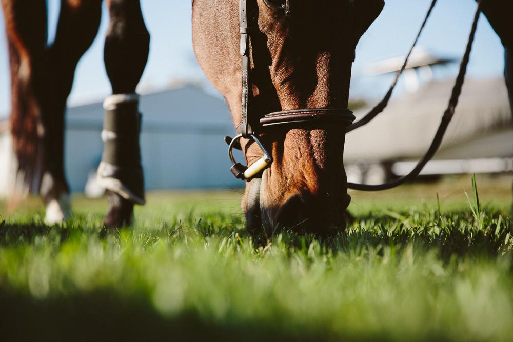horsegrasseatingcloseup