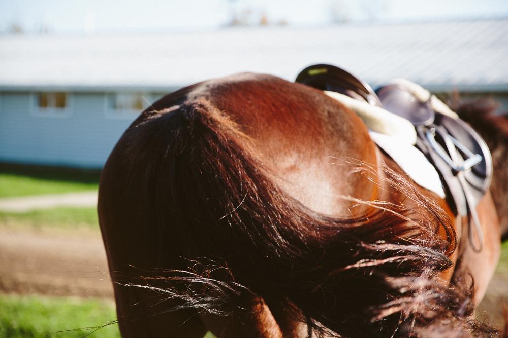 horsetailcloseup