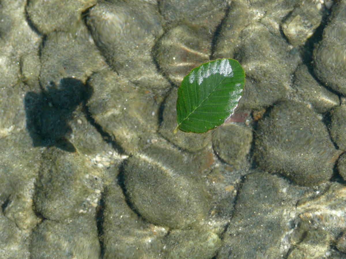 Waterscape with leaf, rocks & shadow