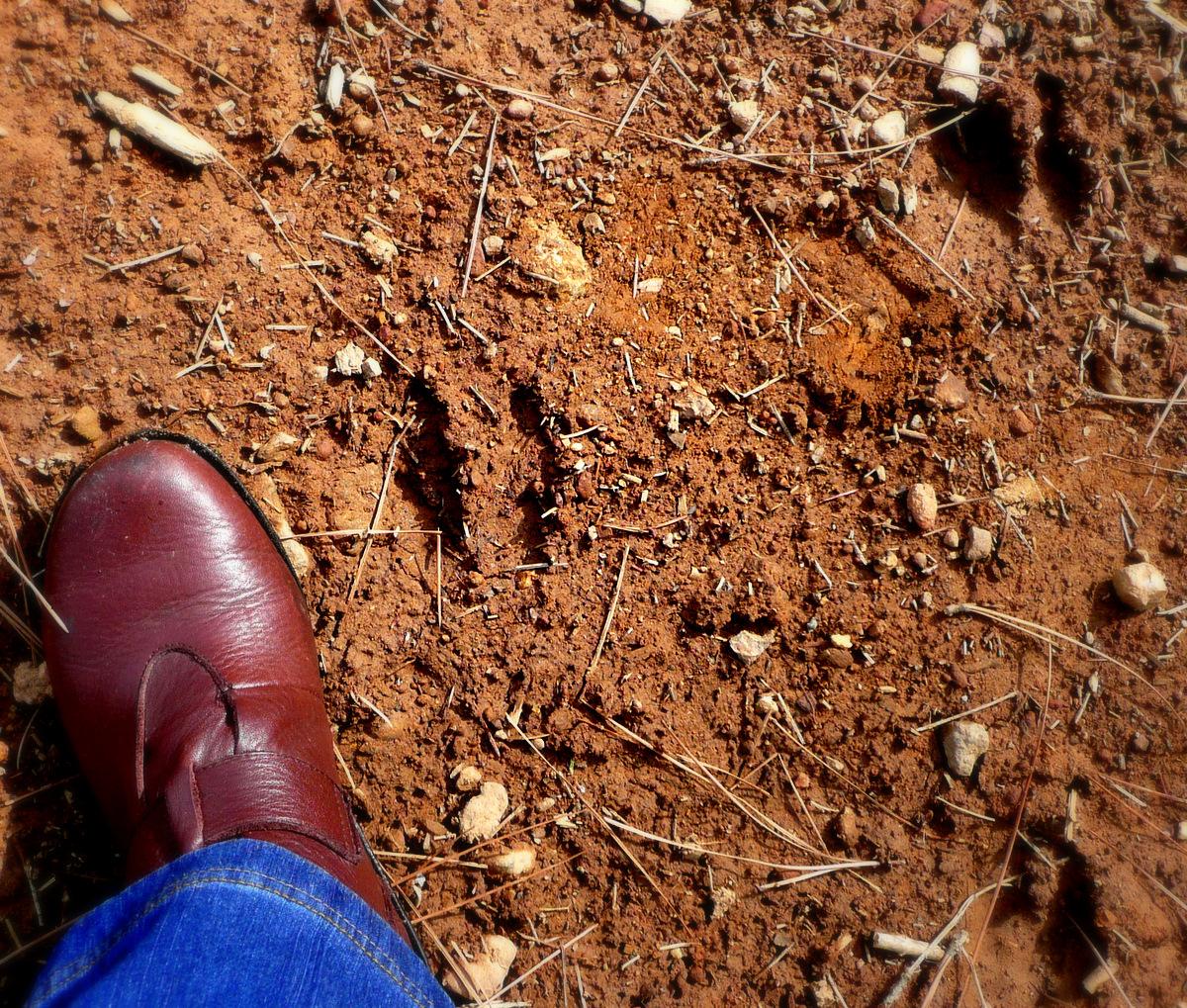 deer tracks in ground