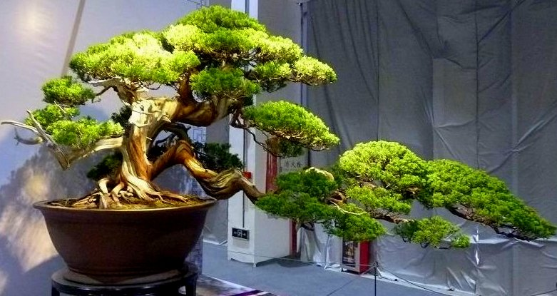 Dongguan tree