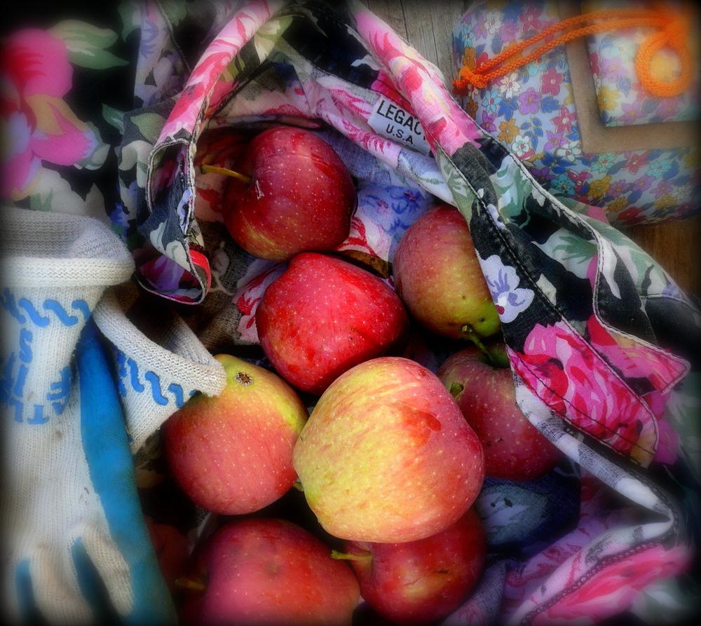 Artisnal apples