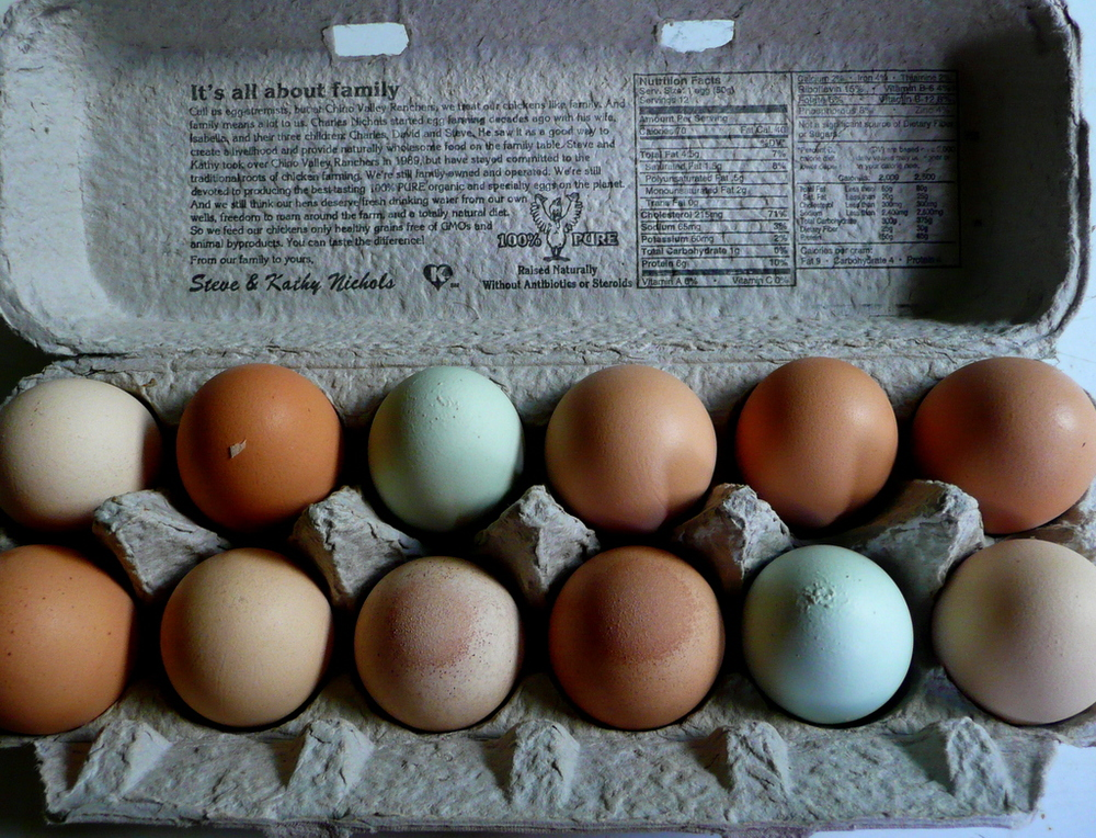 araucana chicken eggs
