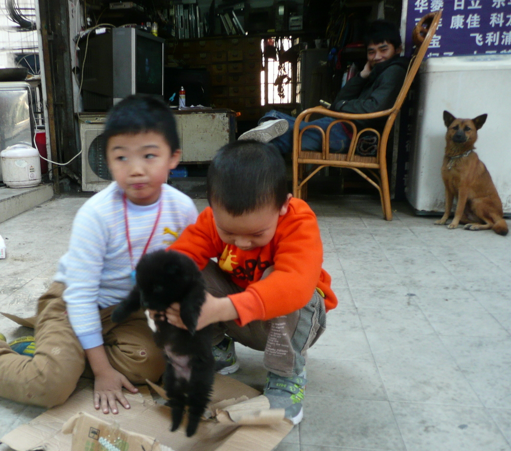 Boys play with puppy in front of father's electronics repair shop. The boys' father and puppy's mother look on.