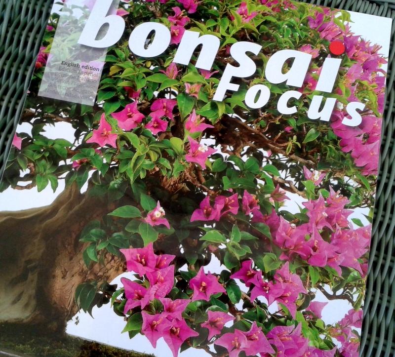 Bonsai Focus cover Jul/Aug