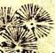 Pine tree logo