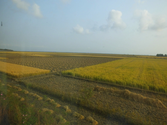 Cut and un-cut fields