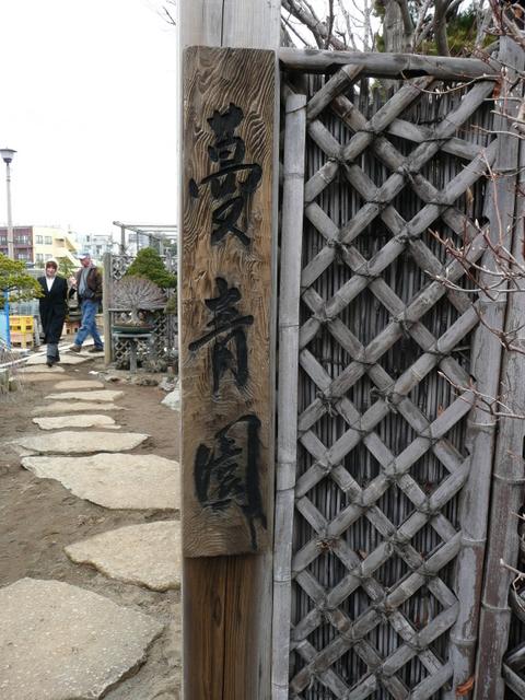 Bonsai Culture
