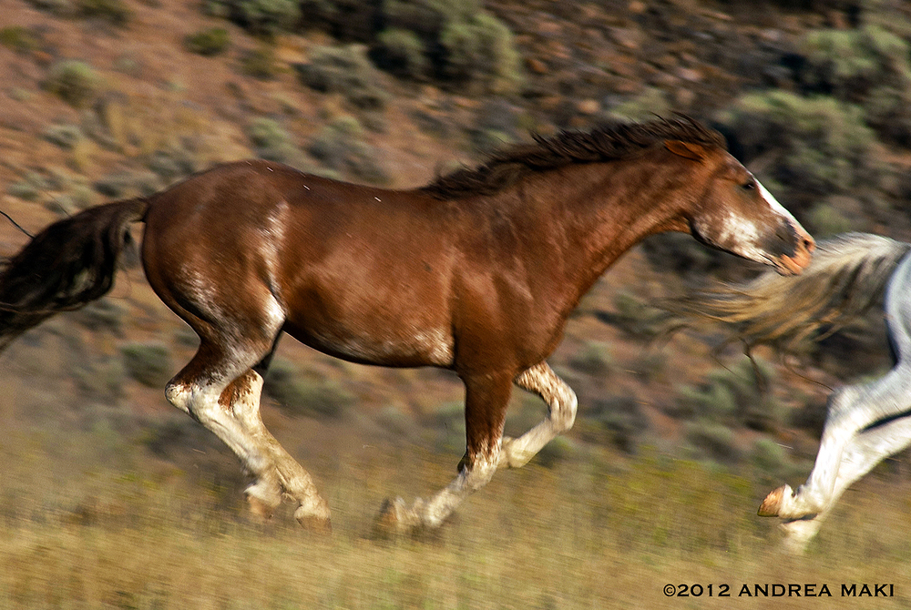 The magnificent Wild Red Stallion leads WLP's charge.
