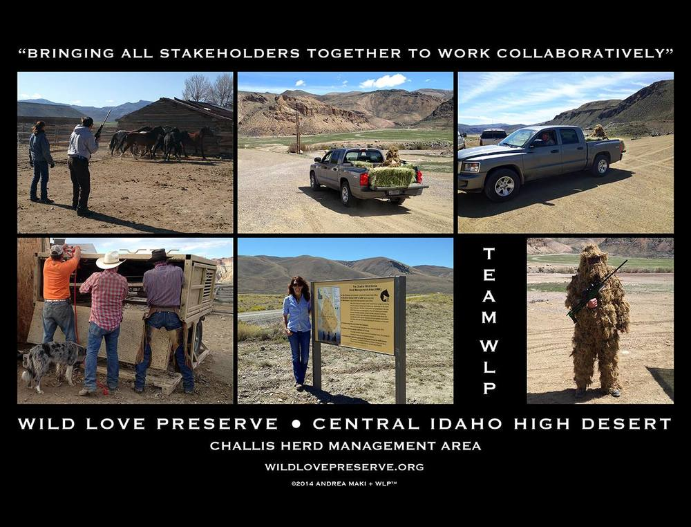 Wild Love Preserve has brought stakeholders from all sides of wild horse issue together to work collaboratively.