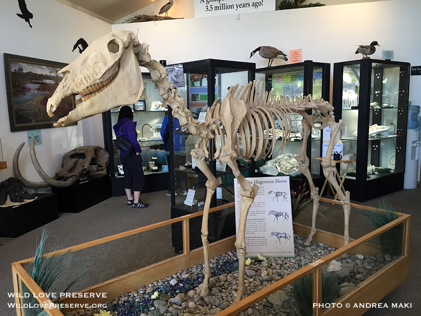 Visit the  Hagerman Fossil Beds National Museum  in Hagerman, Idaho