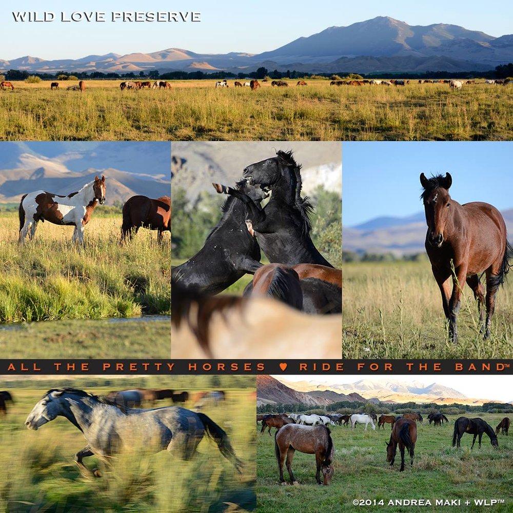 WildLove-AllThePrettyHorses2014.jpg