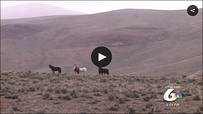 Watch: The Balancing Act of the Challis Wild Horses on KPVI Ch6 News, May 24, 2016
