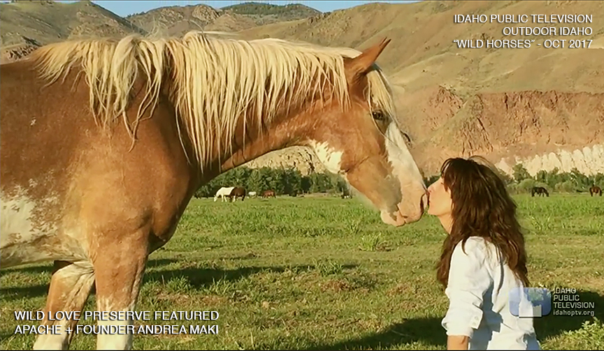 "Wild Love  featured on Outdoor Idaho's ""Wild Horses"" Idaho Public Television,  October 2017"