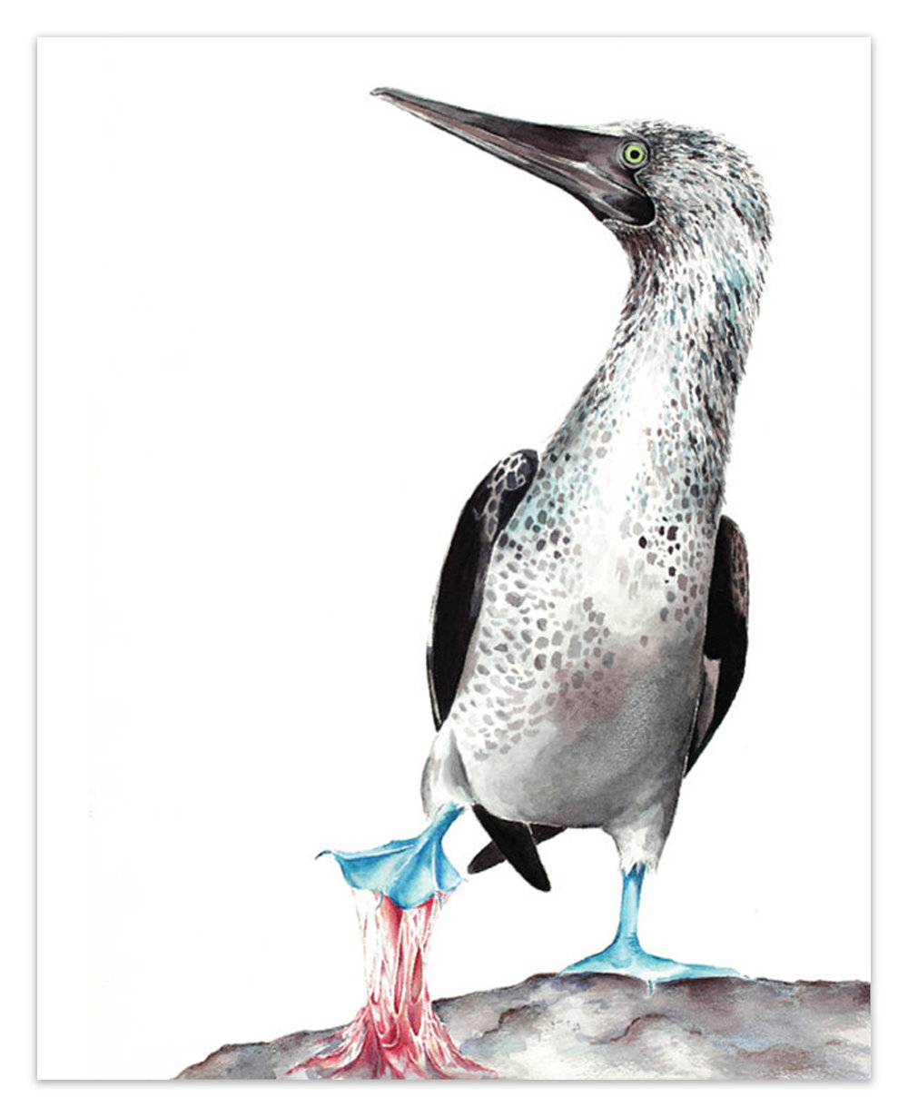 "Sticky Situations: Blue-Footed Booby III.  <br> <span style= ""font-size: 0.75em;""> 🔴  SOLD </span>"