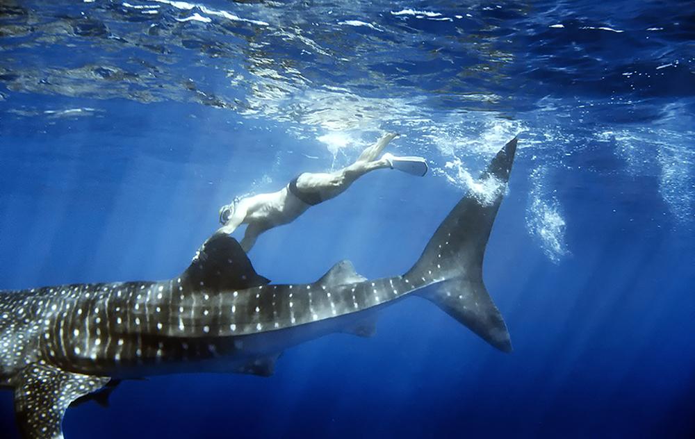 koan-aquatics-steve-whaleshark.jpg