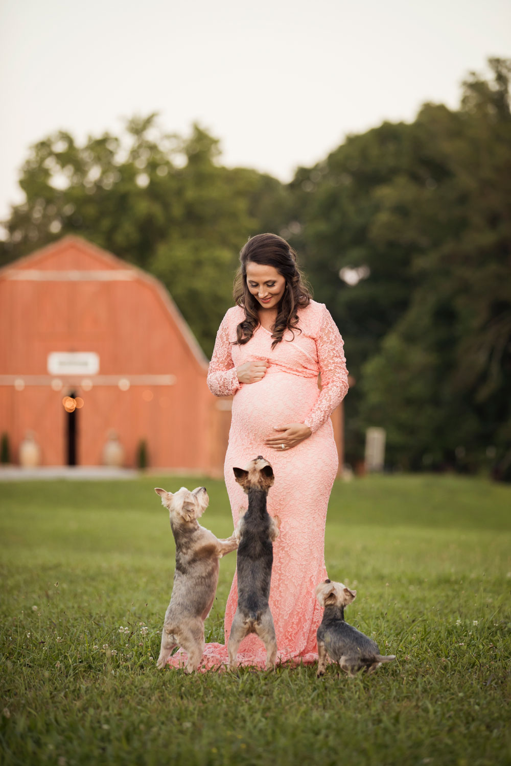 knoxville-maternity-photographer-red-barn-puppies.jpg