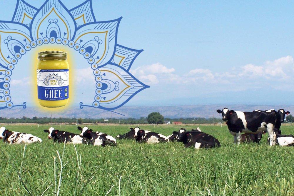 cows ghee.jpg