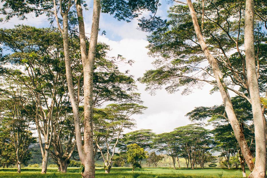 CK-Photo_blog_Kauai-22.jpg
