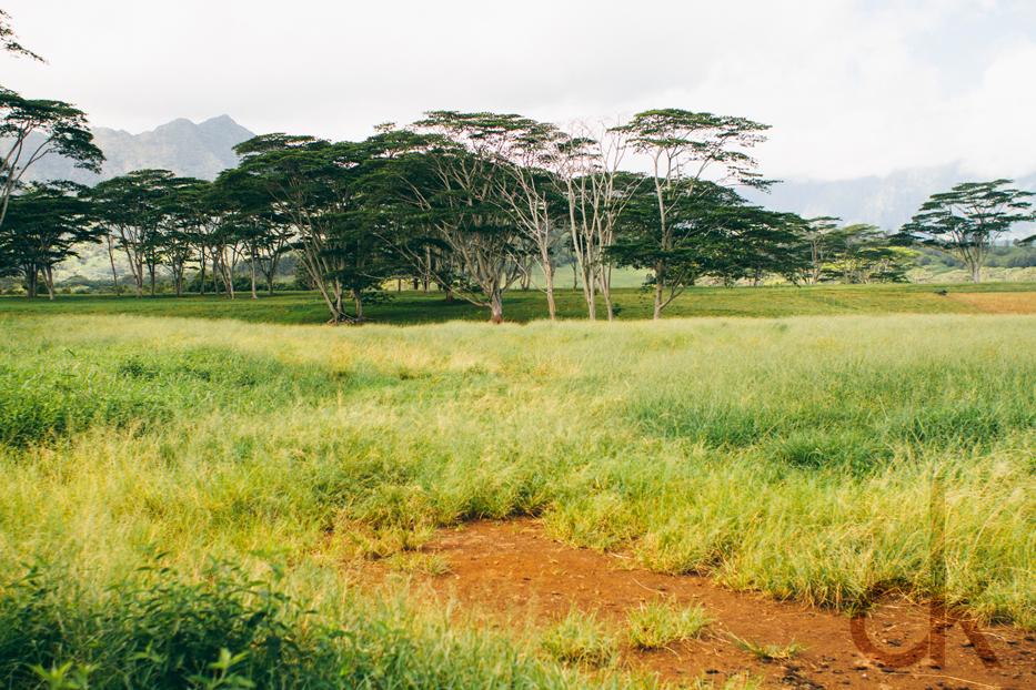 CK-Photo_blog_Kauai-24.jpg