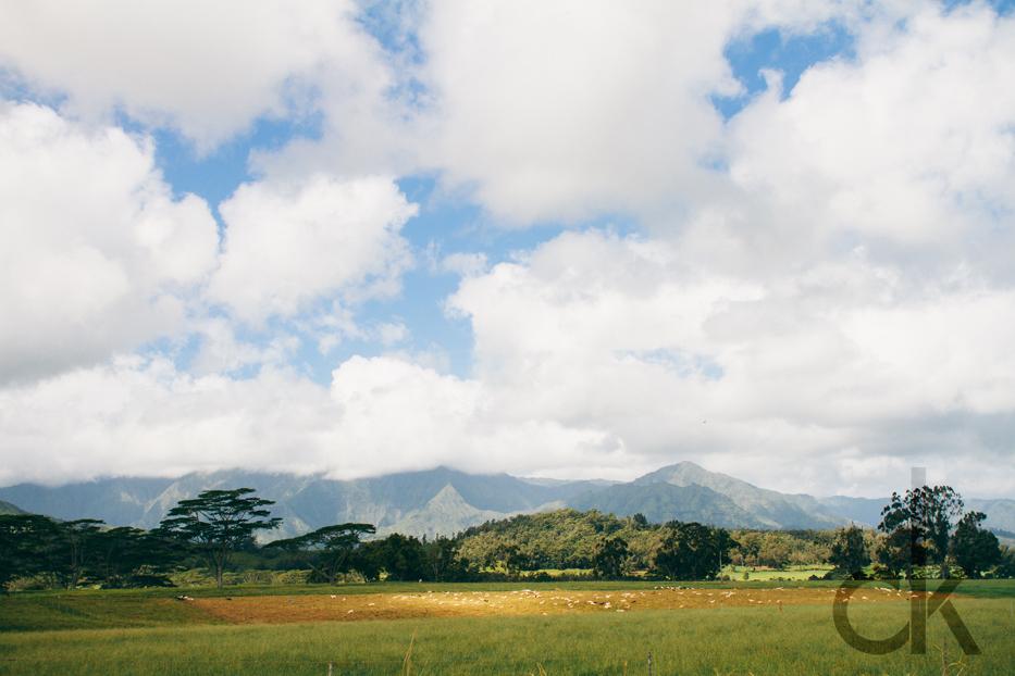CK-Photo_blog_Kauai-25.jpg