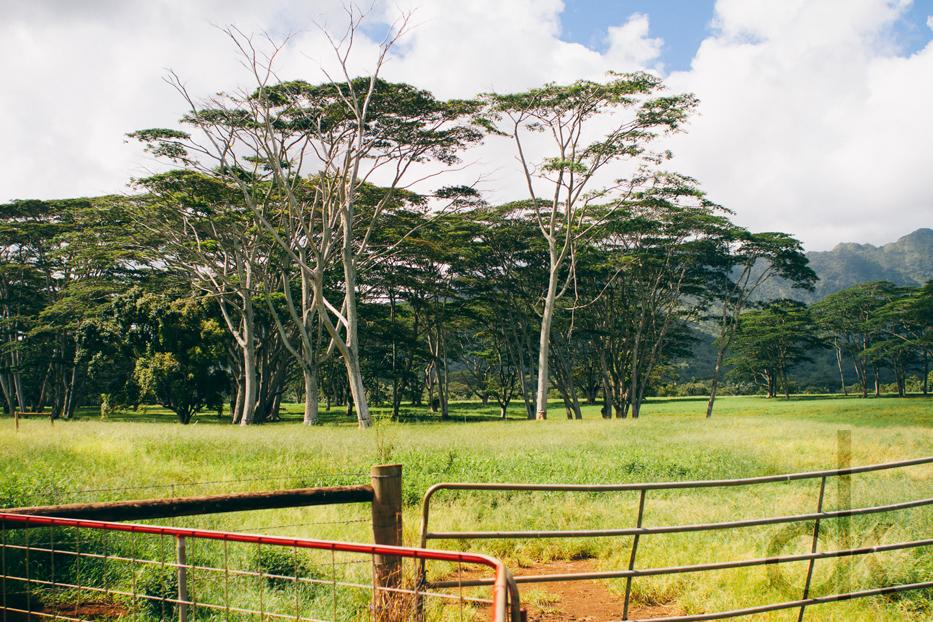 CK-Photo_blog_Kauai-26.jpg