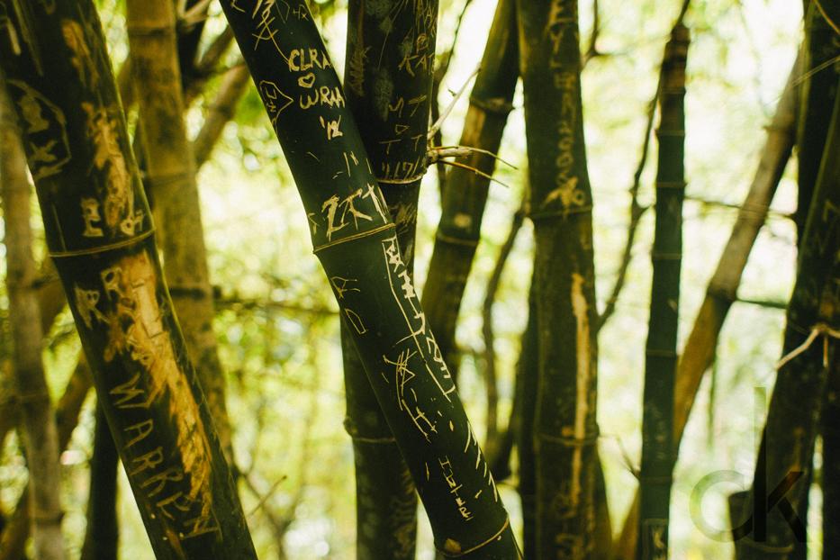CK-Photo_blog_Kauai-74.jpg
