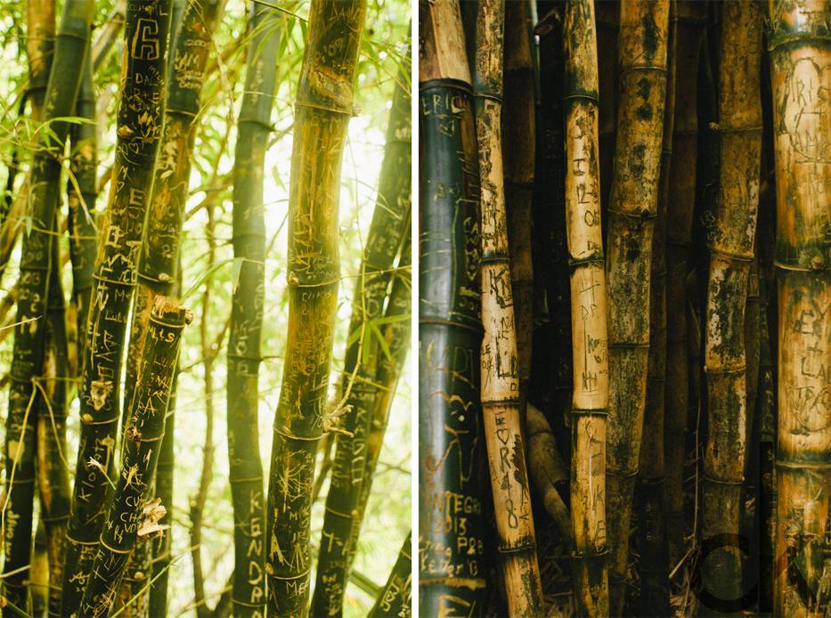 CK-Photo_blog_Kauai-78.jpg
