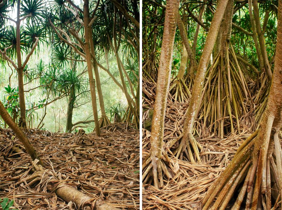CK-Photo_blog_Kauai-88.jpg