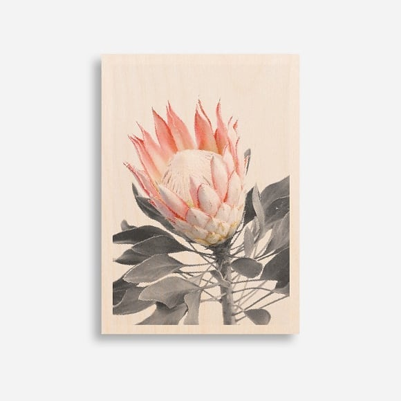 Two of our favourite new limited edition prints, available online soon. Protea 1 and  2 pictured here in A3 also available in square. Email us for more info hello@woodtowall.com.au 🌷 . . . #protea #floral #woodtowall #limitedition #artwork #printonwood #melbournemadr #handmade #art #australianart #woodenart #blush #botanical #artistseries