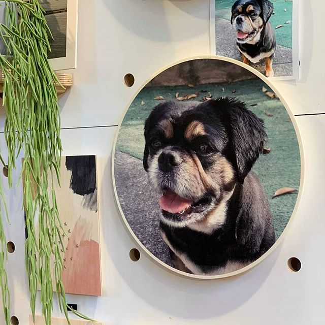 Only 3 days left to place express post orders and if you're Melbourne based you  have 10 days to place store pickup orders. Quick, quick and get to it 🎄🎁 P.s How adorable is little pup Bella?! . . . #puppyphoto #woodtowall #woodenart #woodprint #orderdates #printonwood #plywoodprint #personalisedgift #personalisedart #customprint #customprinting #madeinmelbourne #furbaby