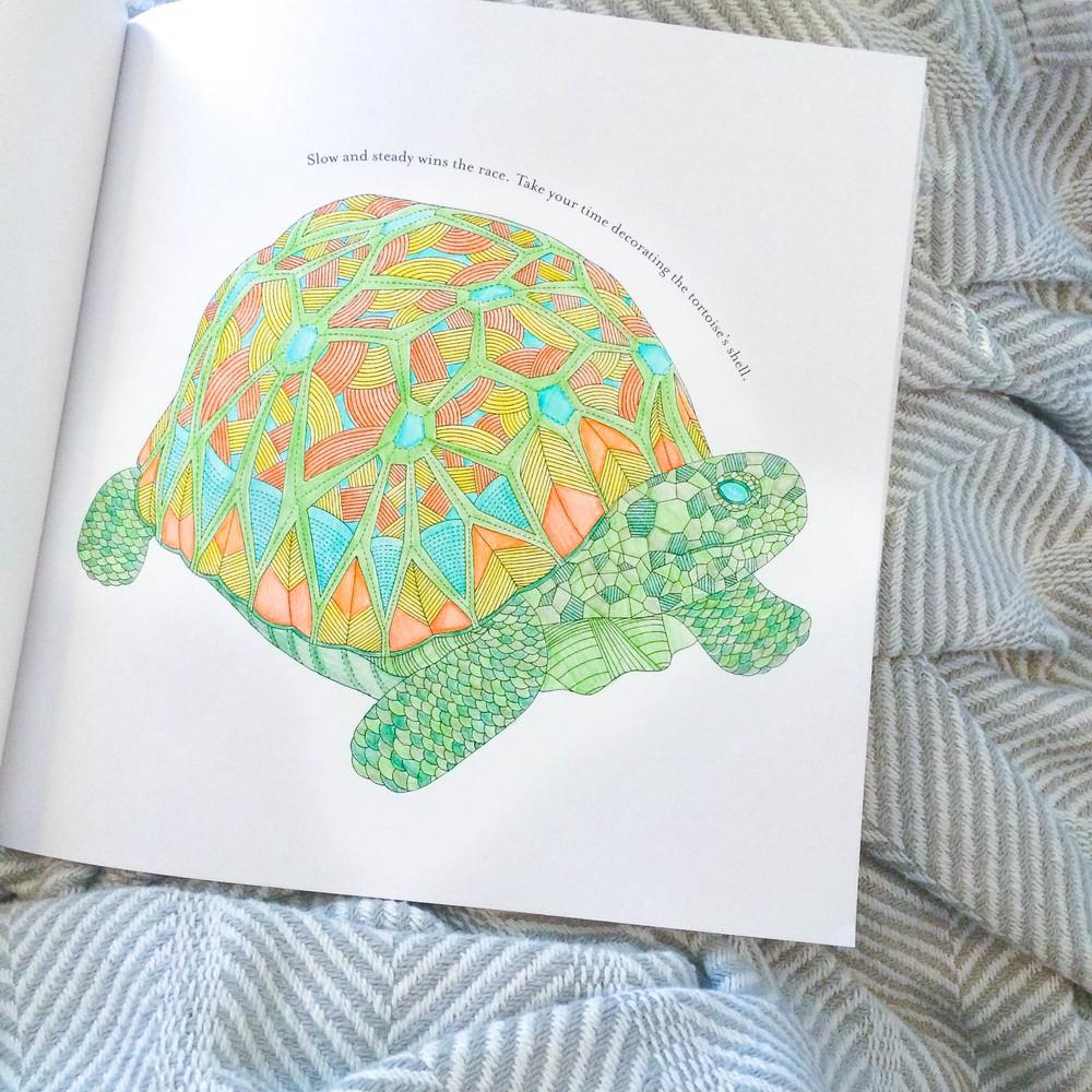 Turtle coloring page | ashleyjoanna.com