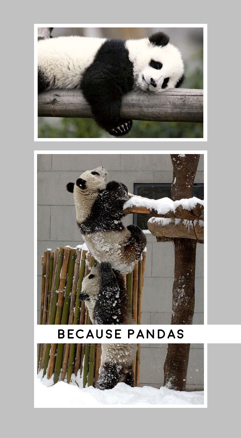 Pandas, Just because