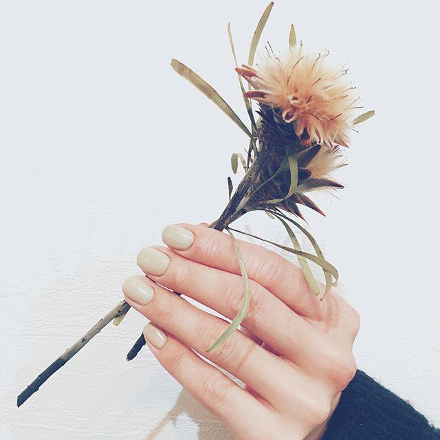 #simple #ナチュラル  #ワンカラー と #ドライフラワー  @yuka_taniguchi_  見たことない、サボテン♡ ありがとうございました🌿  #サボテン #ユーホルビア  #nails #nailsalon #nailart #ナチュラル #naildesing  #ドライフラワー #flower #flowerstagram #ネイルサロン #ネイルデザイン #instagood #fashion #シンプルネイル #dryflower