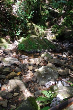 rocky_jungle_stream_portrait_ground_by_compasslogicstock-d6fmg77