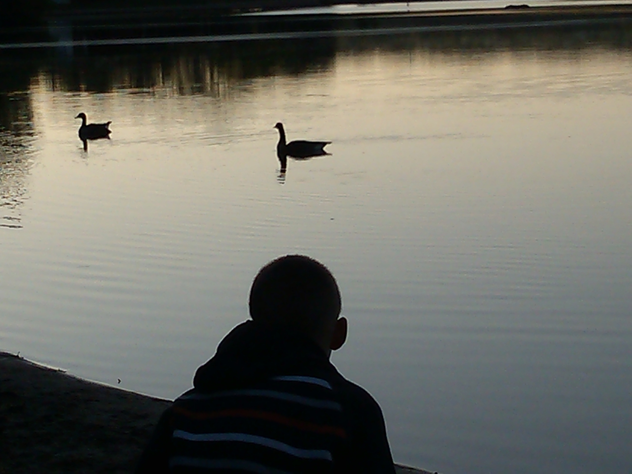 watching ducks just after dawn