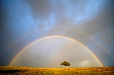 color,landscape,nature,rainbow,sky,tree-e8857418c6879b8f4309b88d5d56c008_h