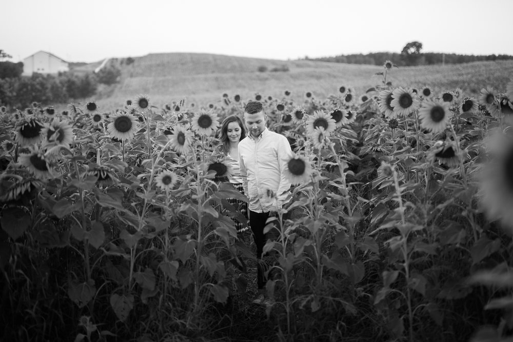Pope-Farms-Sunflower-Engagement-Session-Madison-Wisconsin_017.jpg